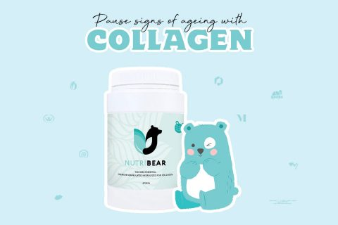 Bear necessity to fight ageing!